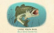 Fauna of America Largemouth Bass