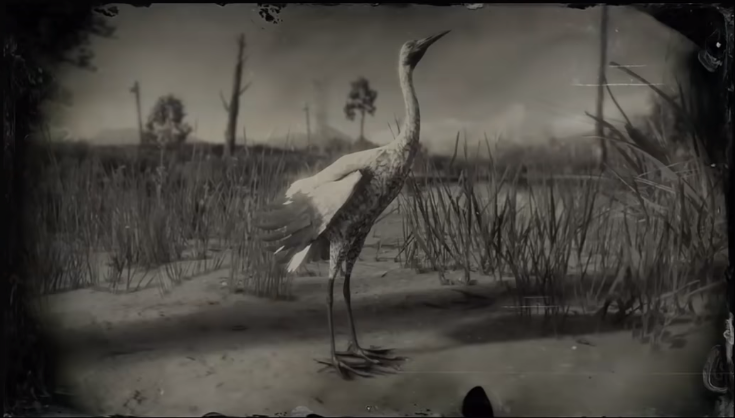 Loons And Turtles And Cranes Oh My >> Crane Red Dead Wiki Fandom Powered By Wikia