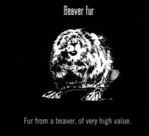 Animals Beaver Fur