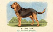 Fauna of America Bloodhound
