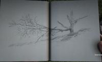 RDR2 POI 43 Warped Tree 02