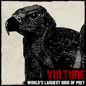 Wildlife vulture