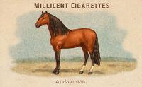 Horses Card Andalusian