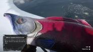 RDR2 - Legendary Sockeye Salmon 02