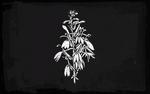 Cardinal Flower RDO