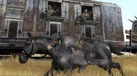Red dead revolver black horse