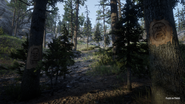 RDR2 POI 12 Faces in Trees 03