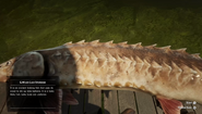 RDR2 - Lake Sturgeon 02