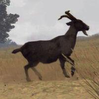 Horned-Goat-01