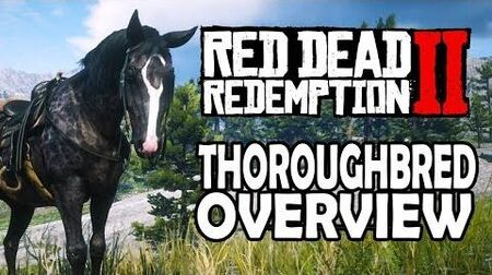 Red Dead Redemption 2 Horses - Thoroughbred Overview