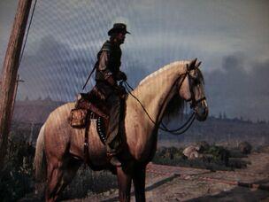 Kentucky Saddler