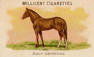 Horses Card Dutch Warmblood