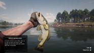 RDR2 - Largemouth Bass