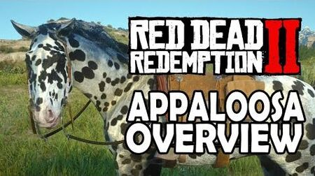 Red Dead Redemption 2 Horses - Appaloosa Overview