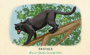 Fauna of America Panther