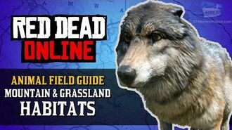 Red Dead Online - Mountain & Grassland Habitats Animal Locations Guide Naturalist Role