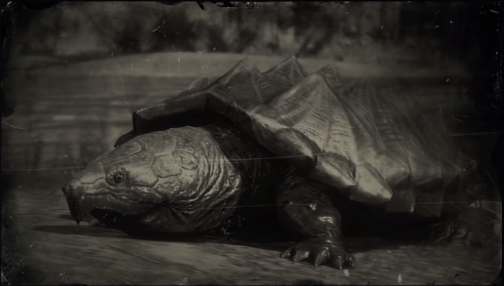 Loons And Turtles And Cranes Oh My >> Turtle Red Dead Wiki Fandom Powered By Wikia