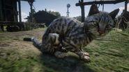 Cat (Photo Mode)