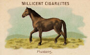 Horses Card Mustang