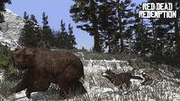 Rdr wolf bear