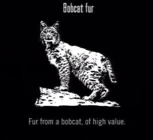 Animals Bobcat Fur
