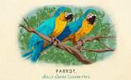 Fauna of America Parrot