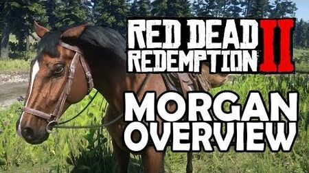 Red Dead Redemption 2 Horses - Morgan Overview