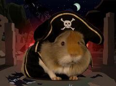 Arrrg guinea pirat
