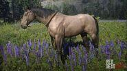 Buckskin-horse