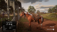 Kentucky Saddler - Chestnut Pinto