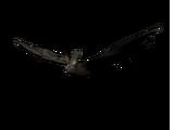 Chauve-souris morte-vivante