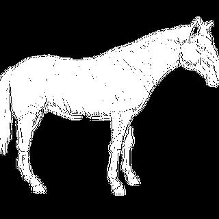 Image de l'encyclopédie
