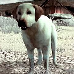 Rufus à <a href=