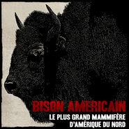 Bison03
