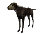Coyote mort-vivant