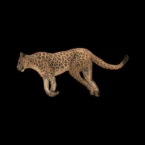 Khan le jaguar