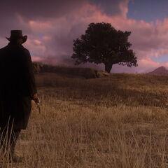 Un homme de dos sur une étendu d'herbe de <a href=