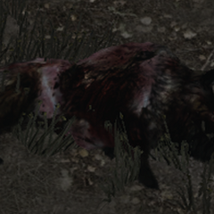 Cadavre de sanglier mort-vivant