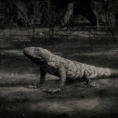 Photo de l'encyclopédie