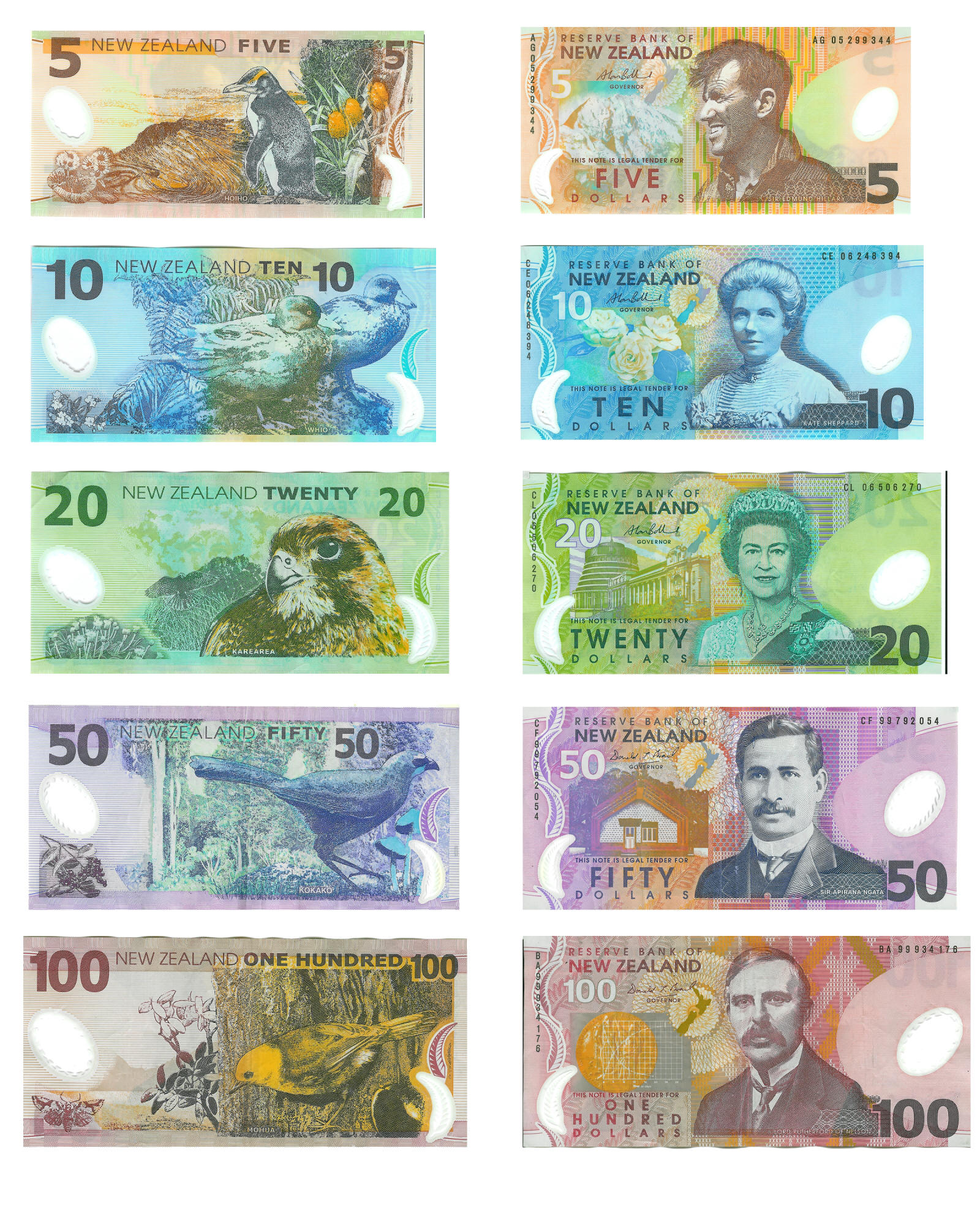New Zealand Money Jpg