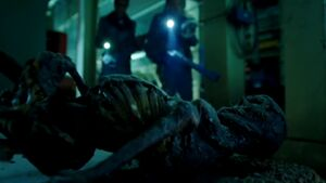 Skeleton of Romero G Gonzalez