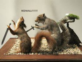 Squirrel kill squirrel
