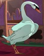 Swan Joy