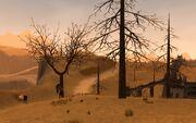 Northeast desertforest