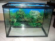 Empty-fish-tank