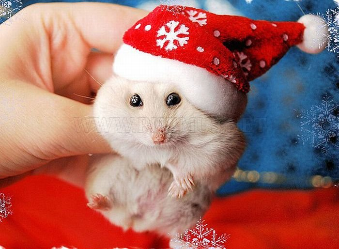image cute animals dressed for christmas 25 jpg reign cw wiki