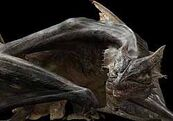 The un-textured Bull Dragon…