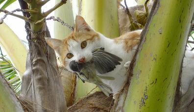 Gato asilvestrado ave