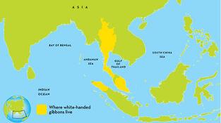 Gibbon-map.ngsversion.1418759103211