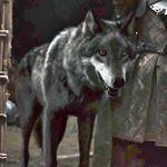 Lobo dirus
